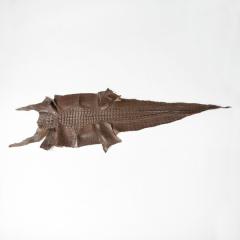 鹹水背紋亮彩軟骨鱷魚皮 43CM